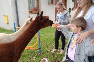 Opiekun wraz w wychowankami karmią alpaki. Wszystkiemu przygląda się pies.